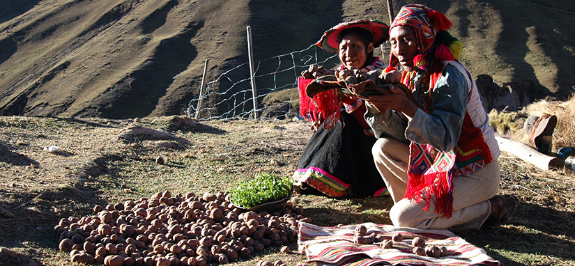 Potato-farmers-peru