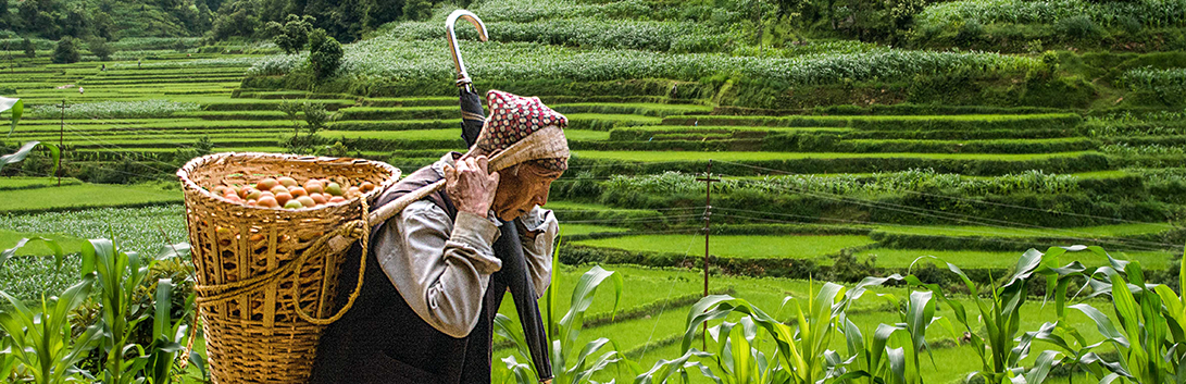 Elderly farmer in Nepal